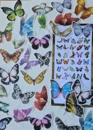 Naklejki vintage motyle